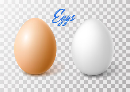 Vector realistic 3d chicken eggs with brown, white eggshell.