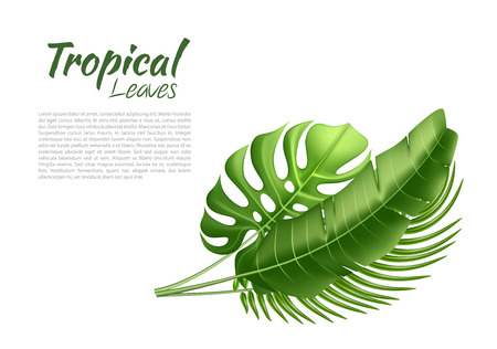 Vector realistic tropical leaves exotic vacation
