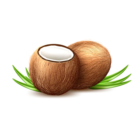 Vector realistic coconut and leaves in 3-D.
