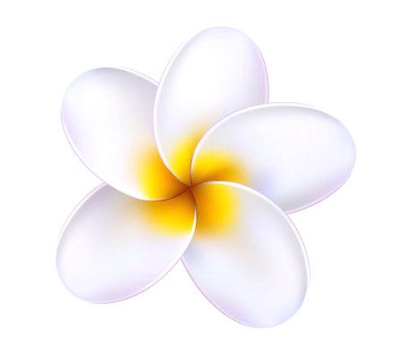 Vector 3d plumeria frangipani tropical flower
