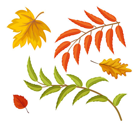 Vector sketch autumn leaves set