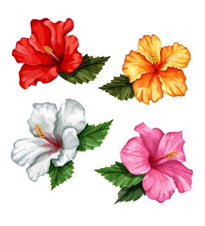 Vector realistic hibiscus flower leaves set 矢量图像