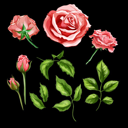 Vector realistic rose flower leaves stem set Çizim