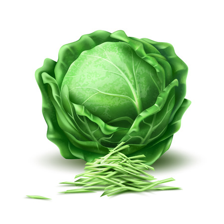 Realistic raw cabbage. Ripe green vegetable full of nutritions and vitamins, juicy fresh cooking ingredient. Vector 3d healthy vegetarian natural food, organic agriculture symbol