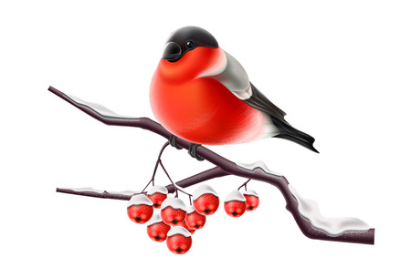 Realistic bullfinch bird sitting at snow branch with red berry. Merry christmas, happy new year winter holidays animal symbol. Cute xmas red bird. Greeting, invitation card vector illustration Ilustracja