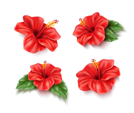 Realistic red hibiscus flowers collection. Tropical plants for pool party, summer vacation design. Exotic flower blossom with green leaves. Seaside beach resort, aloha hawaii natural vector decoration