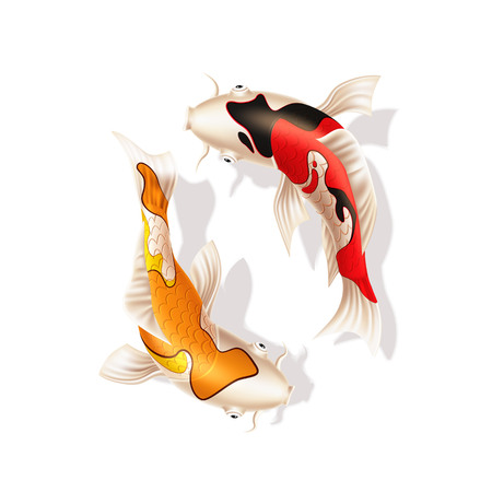 Koi carps realistic fish. Vector chinese, japanese Yin and yang, harmony and balance symbol. Oriental eastern underwater animals. Decorative fish, zen meditation design decoration. Vector illustration