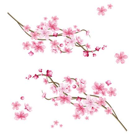Rama de árbol de sakura realista. Símbolo japonés elegante. Ramita de planta floreciente con pétalos de flores rosas. Símbolo cultural asiático. Decoración de diseño floral de primavera. Ilustración de vector.