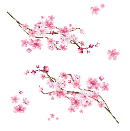 Ramo di albero di sakura realistico. Elegante simbolo giapponese. Ramoscello di pianta in fiore con petali di fiori rosa. Simbolo culturale asiatico. Decorazione floreale primaverile. Illustrazione vettoriale.