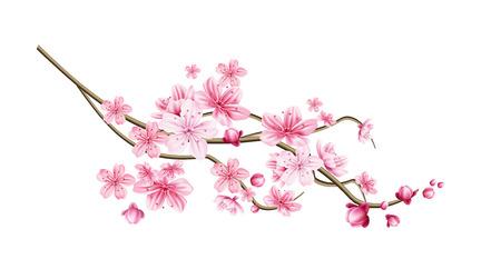 Realistische sakura-boomtak. Elegant Japans symbool. Bloeiend plantentakje met roze bloemblaadjes. Aziatisch cultureel symbool. Floral lente design decoratie. Vector illustratie. Vector Illustratie