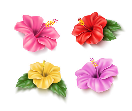 Realistic red, pink yellow hibiscus flowers set. Tropical plants for pool party, summer holiday design. Exotic blossom with green leaves. Seaside beach vacation, aloha hawaii natural vector decoration