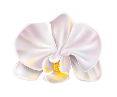 Realistic white orchid flower blossom closeup. Elegant wedding invitation, spa salon decoration design. Vector marriage invitation card, romantic event element. Spring, summer holiday florals