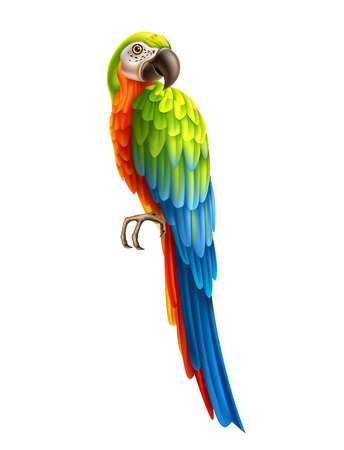 Realistic exotic parrot with colorful feather. Colorful macaw, cockatoo. Vector wild tropical birds with bright feather. Summer holiday design animals.