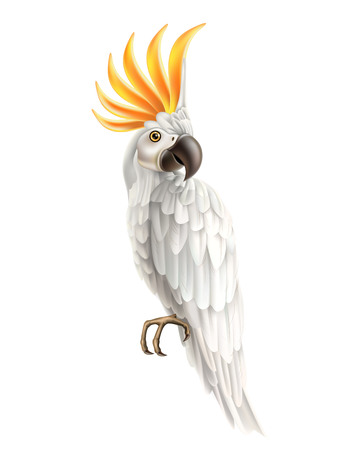 Realistic exotic cockatoo parrot with white feather and orange iroquois. Beautiful macaw. Vector wild tropical birds with bright feather. Summer holiday design animals. Illustration