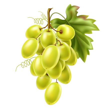 Vector red grape bunch with ripe berry and leaf Vektoros illusztráció