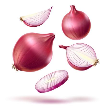 Mélange de tranches de bulbe entier d'oignon rouge réaliste de vecteur