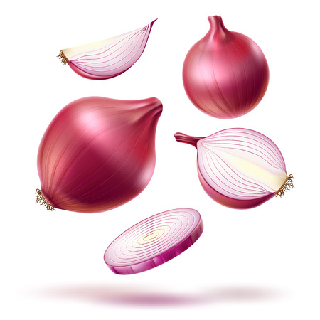 Vector realistic red onion whole bulb slices mix