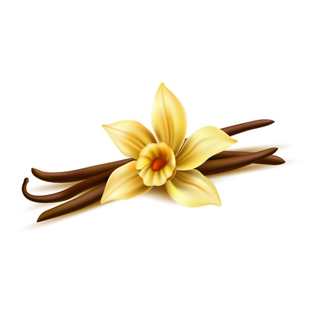 Realistic vanilla flower with dry sticks. Vector yellow orchid blossom with vanilla pod beans. Aromatic flavor, natural condiment. Delicious cooking ingredient. 3d indian seasoning illustration
