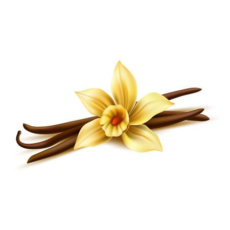 Realistische Vanilleblume mit trockenen Stöcken. Vektorgelbe Orchideenblüte mit Vanilleschotenbohnen. Aromatischer Geschmack, natürliches Gewürz. Köstliche Kochzutat. 3D-Illustration der indischen Gewürze