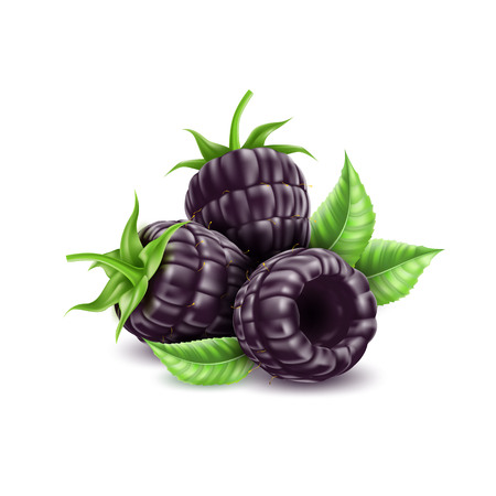 Vector realistic blackberry juicy fruit with leaf Illustration