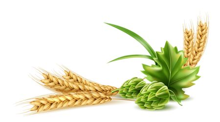 Vector realistic hop cone with green leaf, wheat Illustration