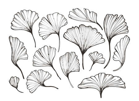 Vector abstract florals minimalistic line art. Hand drawn botanical elements, sketch foliage set. Natural silhouette icons.