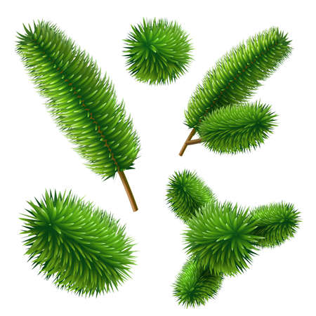 Vector realistic spruce pine tree branch set Иллюстрация