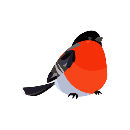 Colorful icon of bird bullfinch vector illustration. Winter bird Isolated on white background. Christmas design element. Christmas robin bird.
