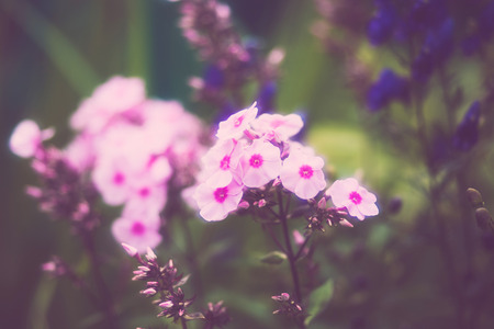 Beautiful flowers made with soft filter. Selective soft focus on the closest flower. Retro aged photo.
