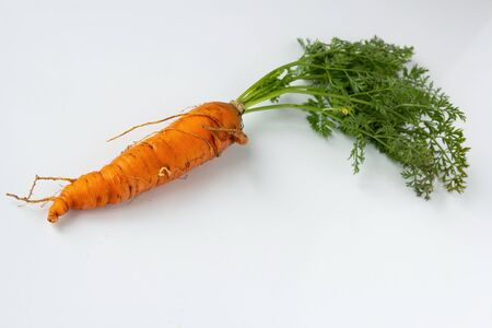 Ugly carrots with tops on a white background. Ugly food