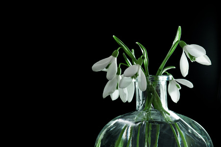 Fresh snowdrops in transparent vase on black background photo