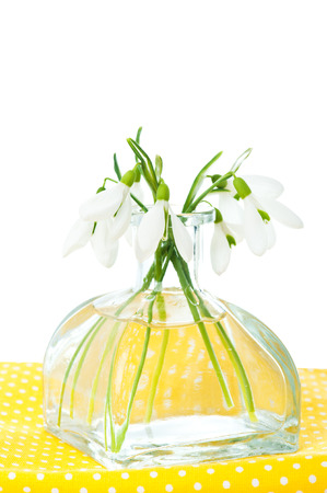 Fresh snowdrops in transparent vase on yellow napkin isolated on white photo
