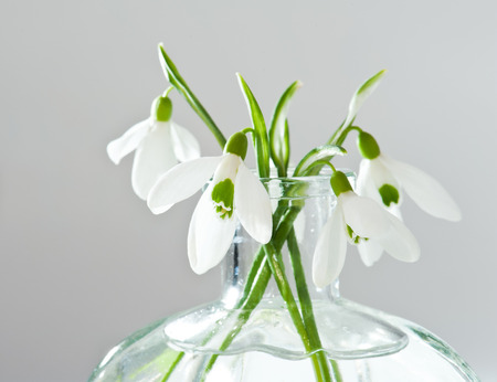 Fresh snowdrops in transparent vase on grey background photo