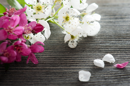 Pink and white blossom on a dark wooden background  photo