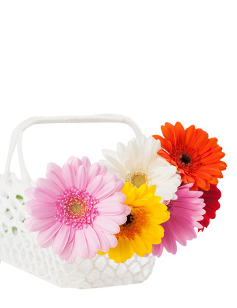 crocheted: Daisies flowers in the white crocheted basket. Flower decor for the home. Isolated on white