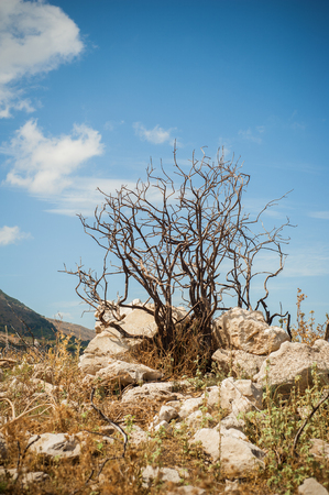 greece granite: Dry tree and stones on the top of the hill