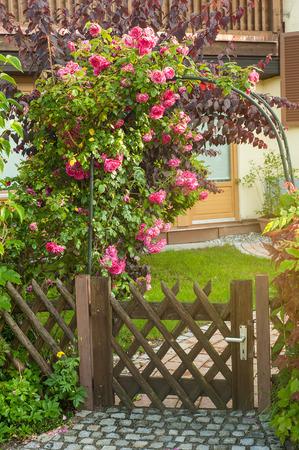 Rose rosse che salgono sulla recinzione di legno. Immagine tonica in stile vintage