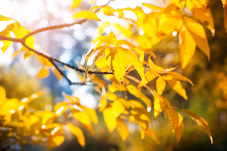 Autumnal background of park, yellow red trees in sunlight Imagens