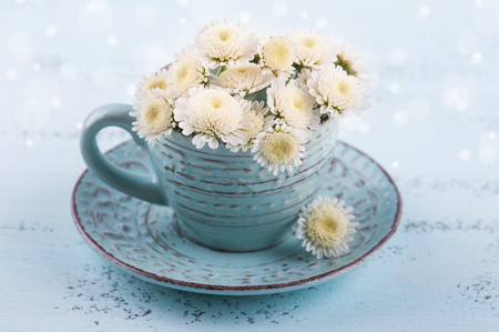 White chrysanthemum flowers in cup on blue wooden background