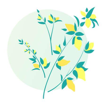 Lemon branch, vector illustration isolated on white background. Hand drawn citrus fruits with leaves Illusztráció