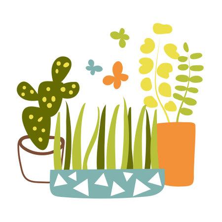 House plants in pots in Scandinavian style. Vector illustration in flat style