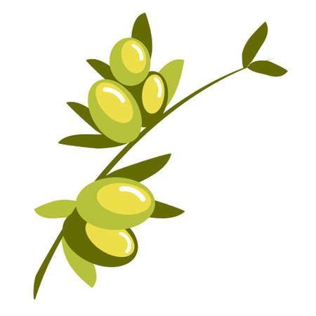 Olive branch, vector illustration. Hand drawn fruits with leaves