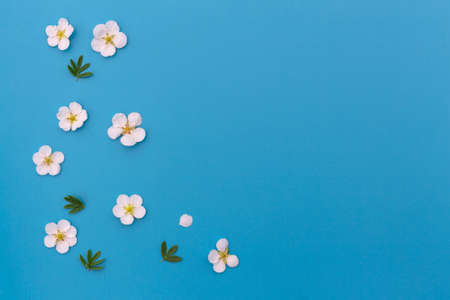 Beautiful spring nature background with flowers. Composition of white flowers with green leaves on a light blue background . Banner with copy space