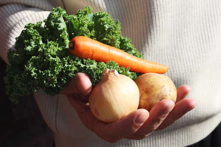 in the man's hand carrots, potatoes, cabbage leaves, onions vegetables for vegetarian soup 写真素材