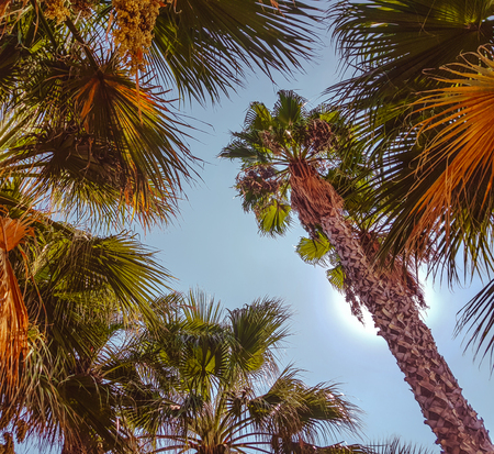 The tops of palm trees against the blue sky and the sun.