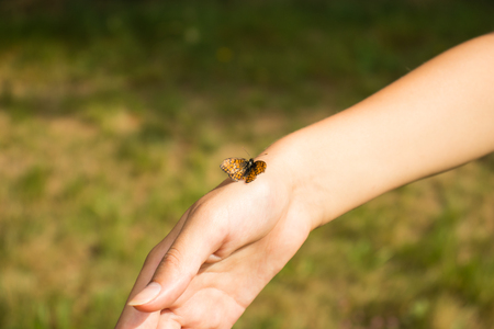 A gentle girls hand with a small defenseless butterfly. Stock Photo
