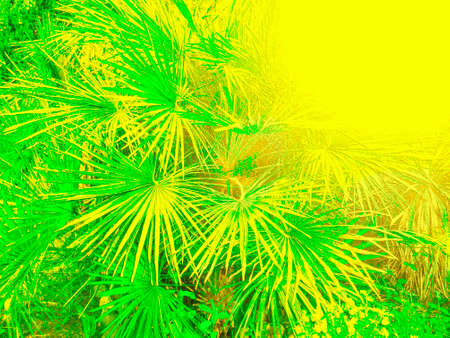Pattern of palm leaves overexposed in a yellow hue. Background .