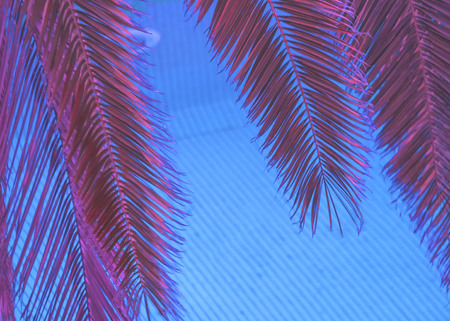 Red leaves of a palm tree over blue water in a pool. The concept of heat and coolness.
