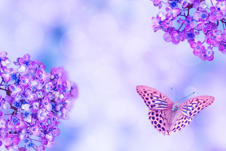 violet alyssum flowers and butterfly on a blured background with copy space for text Stockfoto