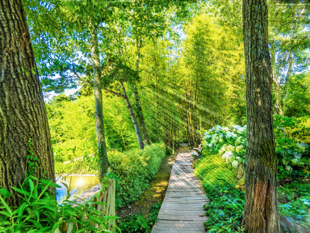 The path in the bamboo forest on the shore of the lake is paved with wooden boards
